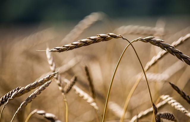 12 zdrowych amerykańskich przepisów na pszenicę